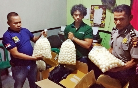 4,600 poached sea turtle eggs confiscated in Tanjung Redeb, Borneo
