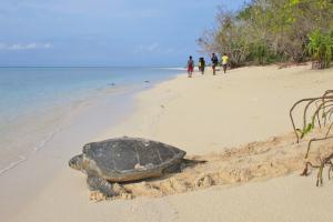 Grüne Meeresschildkröte auf Rückkehr ins Meer nach der Eiablage