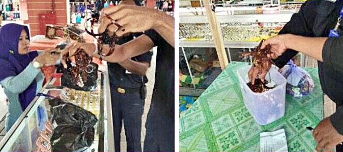 Turtle shell souvenir confiscation on Adji Dilaya market Berau