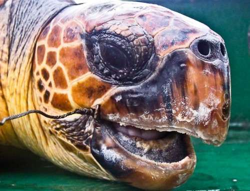 Financed by European taxpayers: Industrial fisheries kill countless sea birds and sea turtles