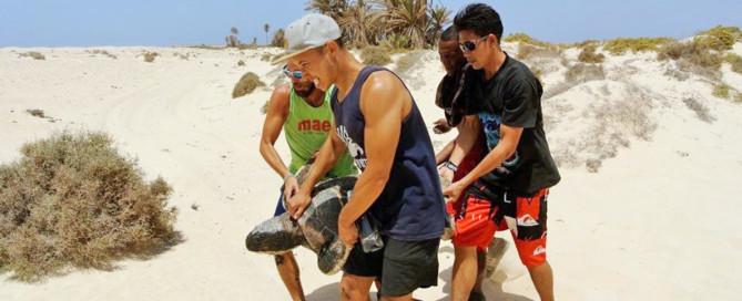 Turtle rescue 2017