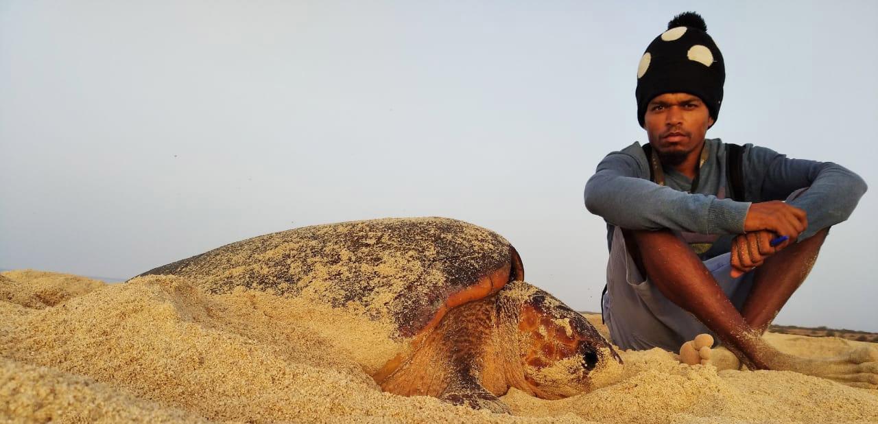 Ranger with Loggerhead sea turtle