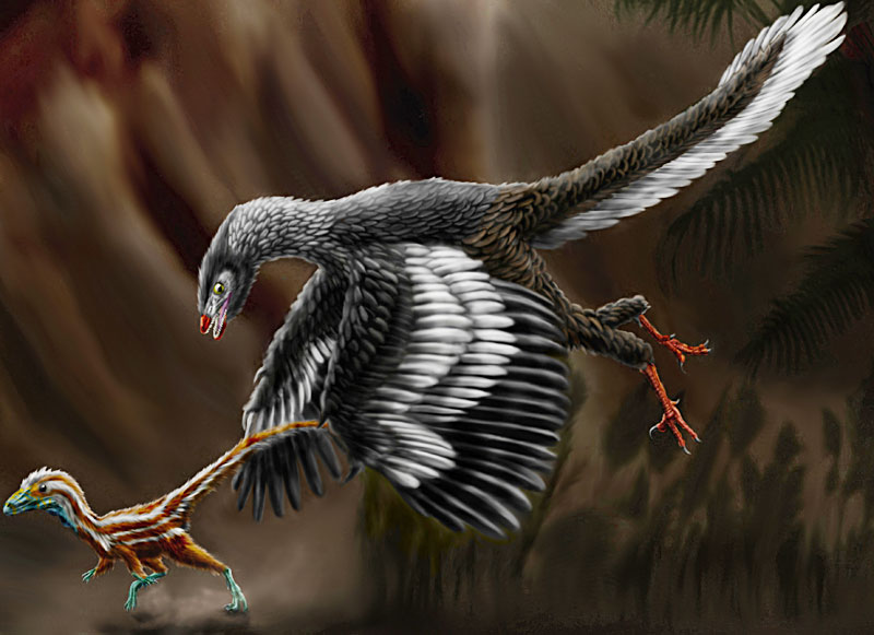 Archaeopteryx chasing a juvenile Compsognathus (Wikipedia)