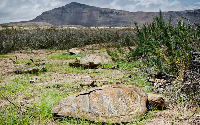 Poached turtles Cruz do Morto 2016