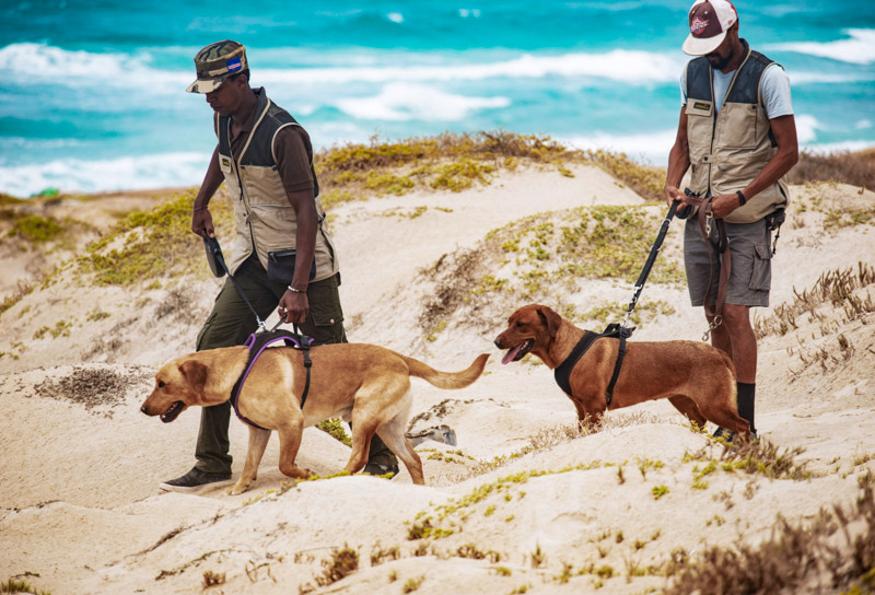 Conservation dog training on Boa Vista
