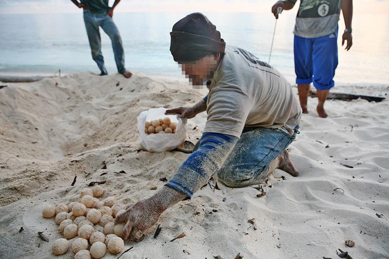 Egg collectors on Sangalaki, Indonesia