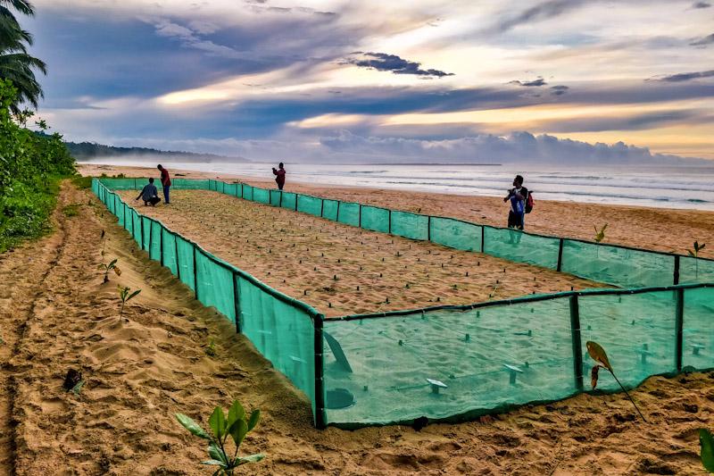 Hatchery for leatherback turtles; Sipora, Indonesia