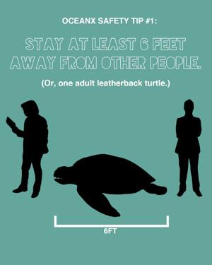Distance one adult leatherback turtle