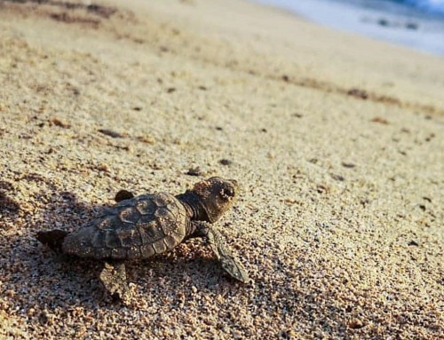 Newsletter September 2020: Meeresschildkrötenschutz trotz Corona