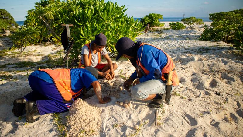 Turtle Rangers on Belambangan island, East Borneo, Indonesia