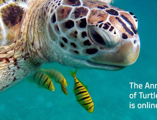 Newsletter April 2021: Der Jahresbericht der Turtle Foundation ist online!