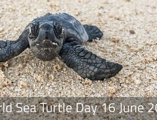 Newsletter Juni 2021: Welttag der Meeresschildkröten 16. Juni 2021