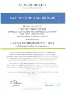 Adoption certificate Senckenberg exhibit hawksbill large