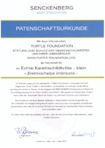 Adoption certificate Senckenberg exhibit hawksbill small