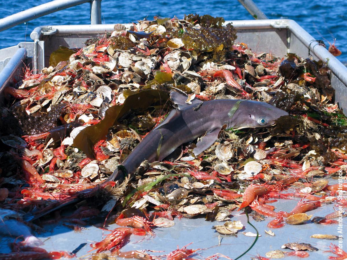 Fishery bycatch