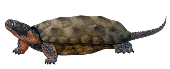 Sichuanchelys palatodentata reconstruction from Lida Xing