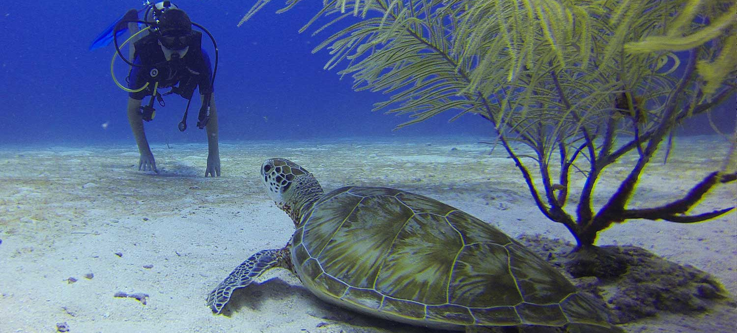 diver with sea turtle (underwater)
