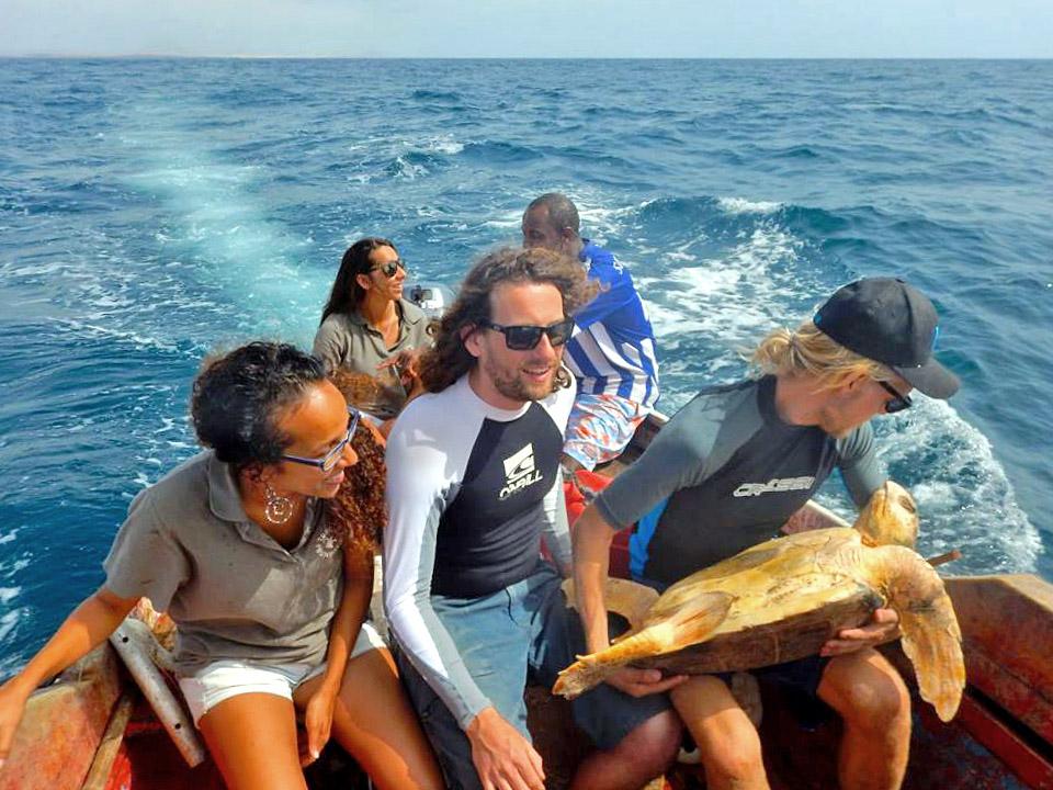 Release of loggerhead turtle Luisa