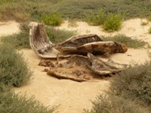 2010 killed turtle