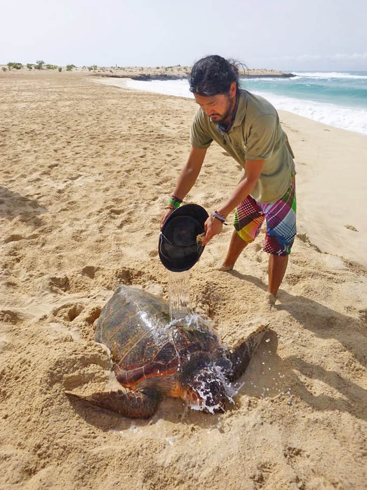 Turtle Rescue Curral Velho August 2016