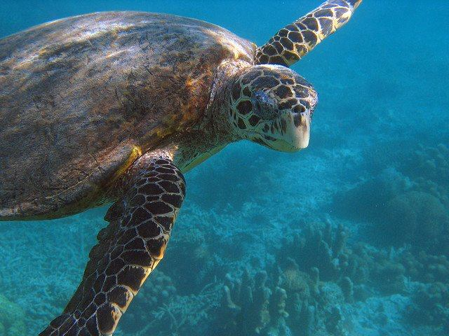 Save Green Sea Turtles