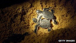 New law to protect Puerto Rico leatherback turtles