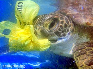 Sea turtle eating plastics