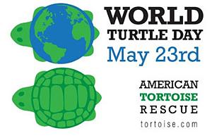Logo World Turtle Day