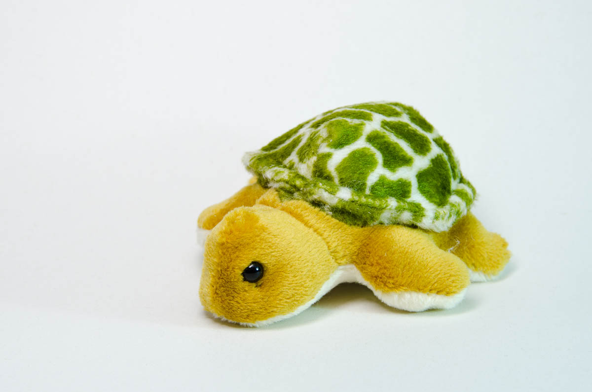 Mini turtle with magnet