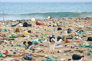 Beach pollution