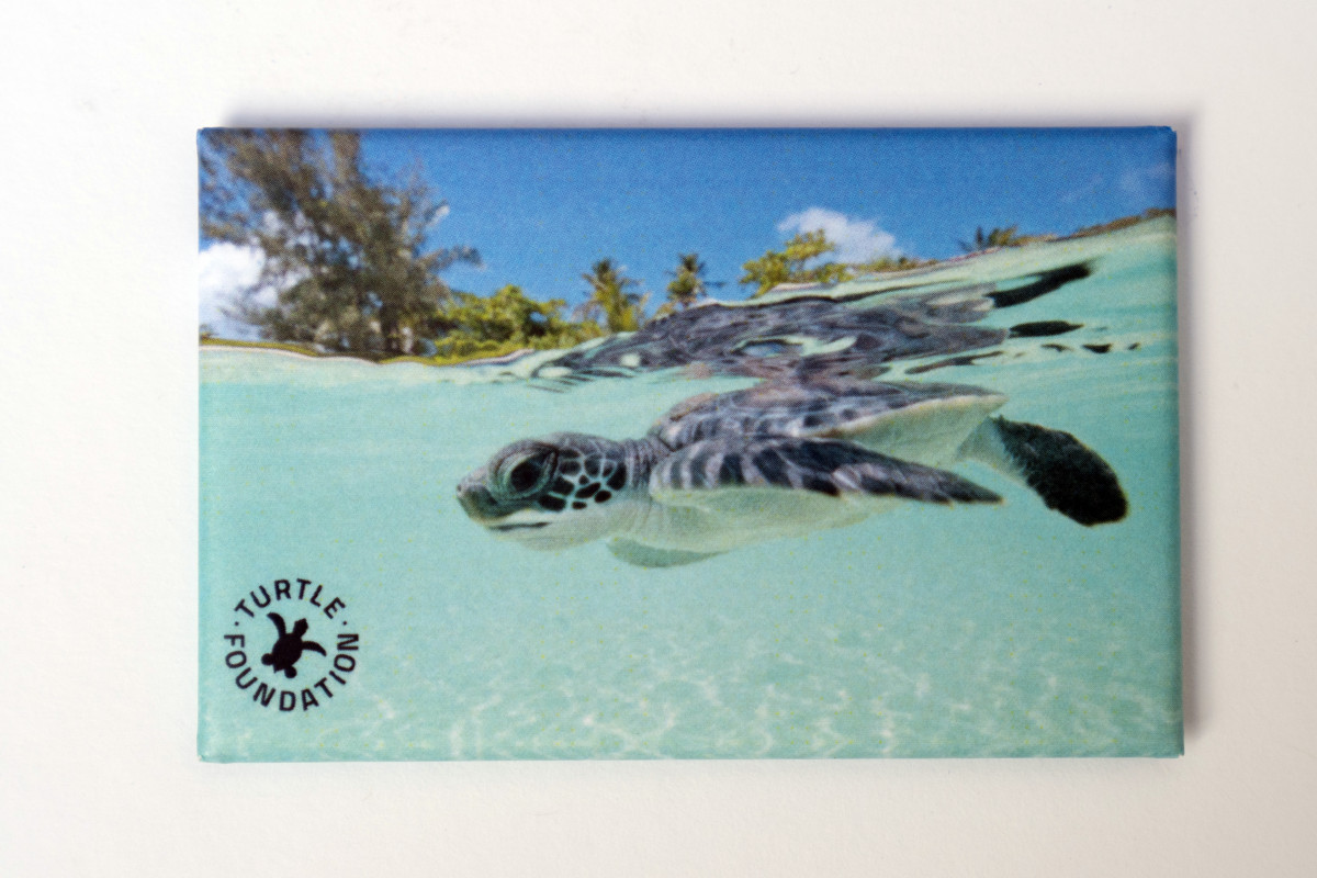 Kühlschrank Magnet Turtle